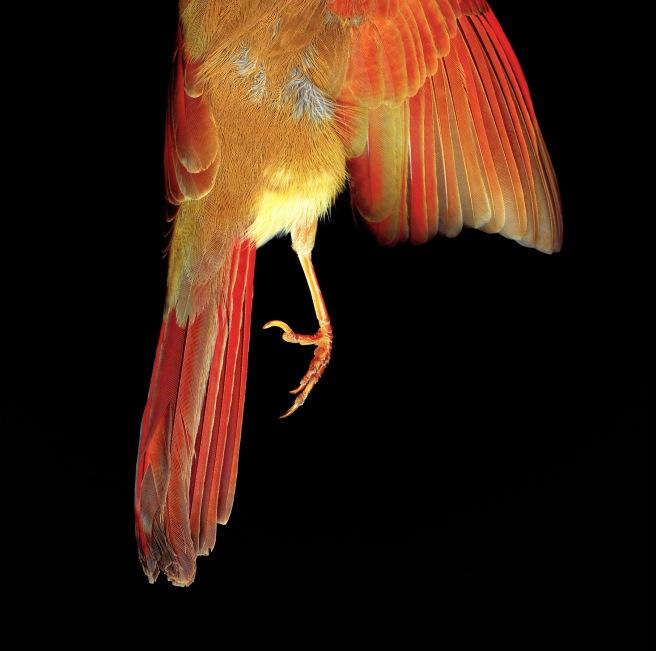 CardinalFoot_2008