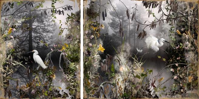 Les Naturalistes,2012 © Ysabel LeMay