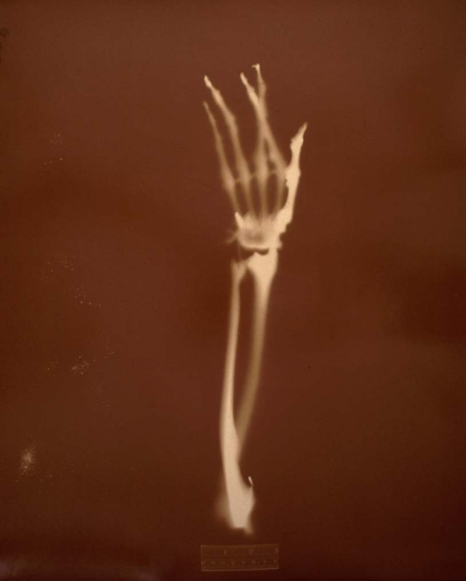 Crossed Fingers, 2002 © Keith Carter