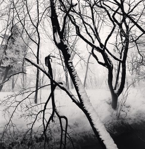 Kawayu Forest, Study 1, Hokkaido, Japan. 2014 © Michael Kenna