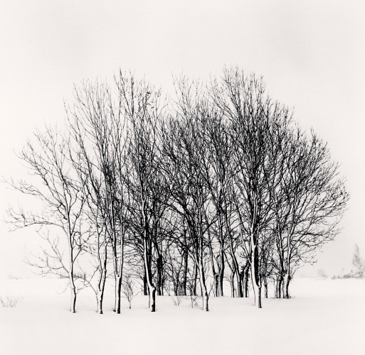 Group of Trees, Nanporo, Hokkaido, Japan. 2014 © Michael Kenna