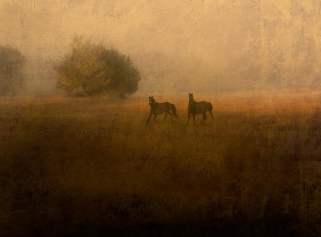 Two Wild Horses, Cumberland Island, 2007 © Jack Spencer