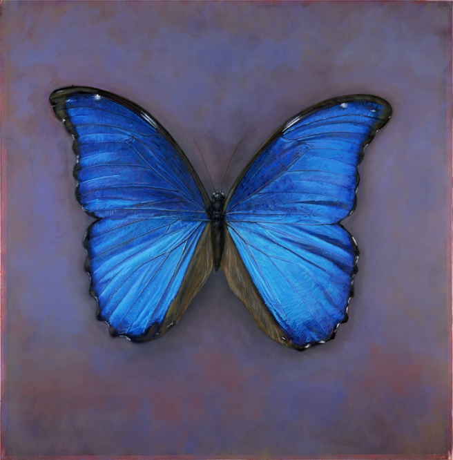 Blue Morpho, 2004 © Kate Breakey
