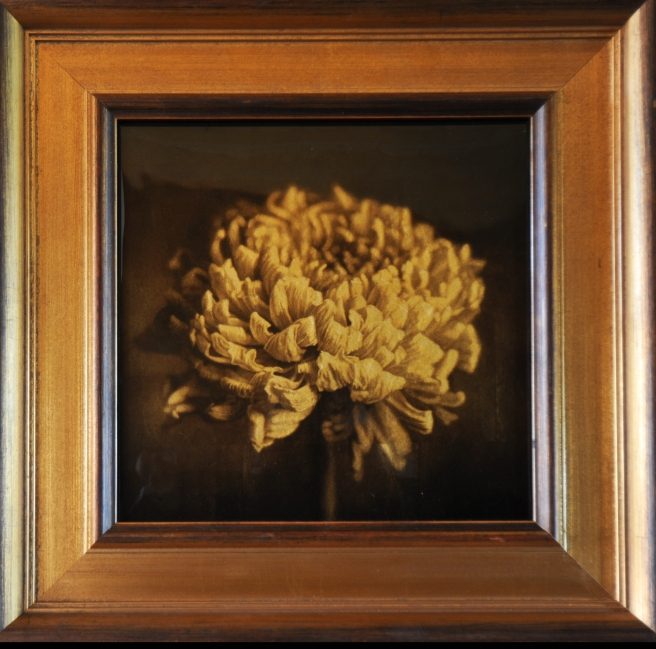 Chrysanthemem © Kate Breakey