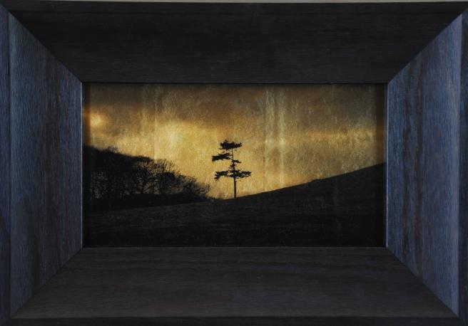 Lone Tree, Midland, UK, 2014-2015 © Kate Breakey