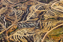 Indonesia new palm terraces (#9), 2009 © Daniel Beltrá
