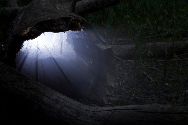 Hollow+Log