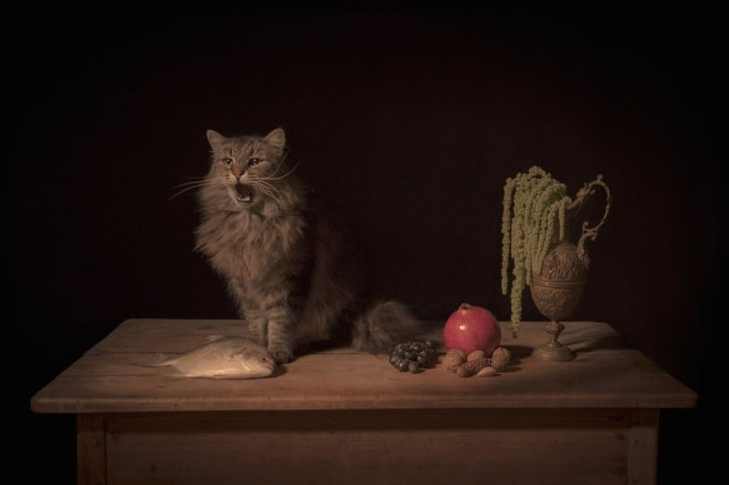 Image: Tami Bahat, The Feline, 2017. A photograph of a brown, striped cat with its mouth open. The cat is sitting on a brown table with a fish, grapes, nuts, a pomegranate, and a vase with a green plant. The background is very dark.