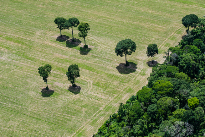 Image: Amazon Castanheira survivors (#221), 2017 by Daniel Beltrá. An aerial photograph of the Amazon Rainforest with many trees to the right and only a couple on the left.