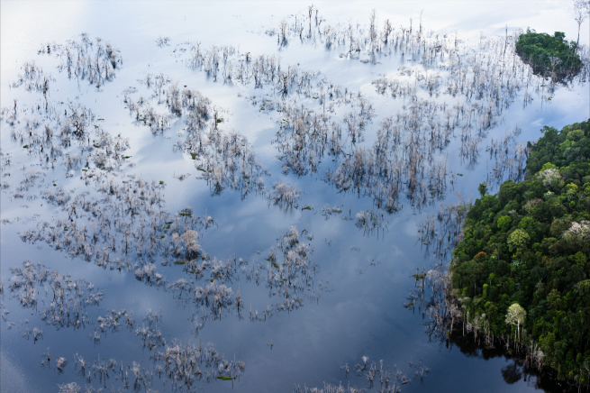 Image: Amazon flooded by dam, (#230), 2017 by Daniel Beltrá. An aerial photograph of a flooded rainforest.